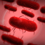 Bacteria Master in Plague Inc: Evolved
