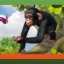 Come On Over to My Place in Zoo Tycoon: Ultimate Animal Collection