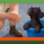 One of Everything in Zoo Tycoon: Ultimate Animal Collection
