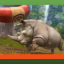 Smooth Over the Cracks in Zoo Tycoon: Ultimate Animal Collection